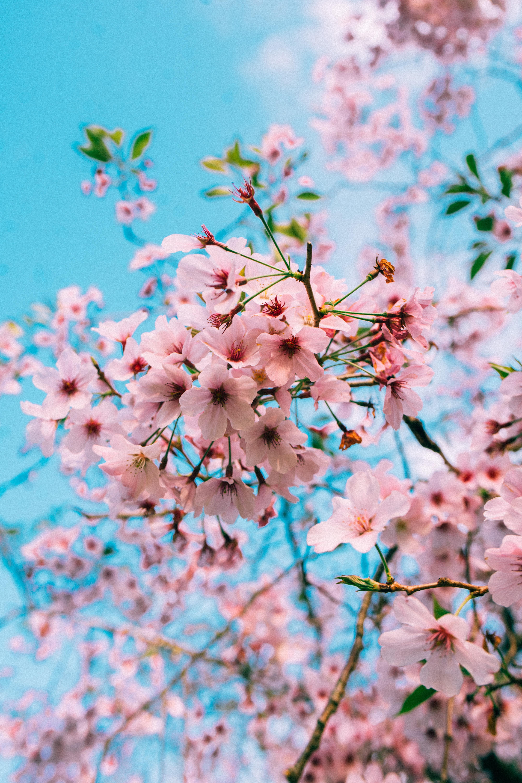 National Cherry Blossom Festival Petalpalooza